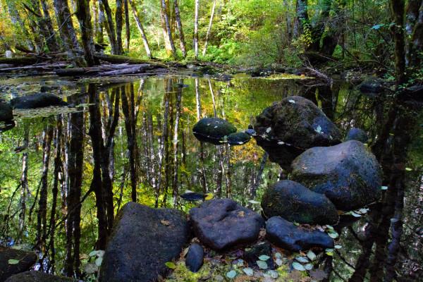 Reflection Pond - NatGeo